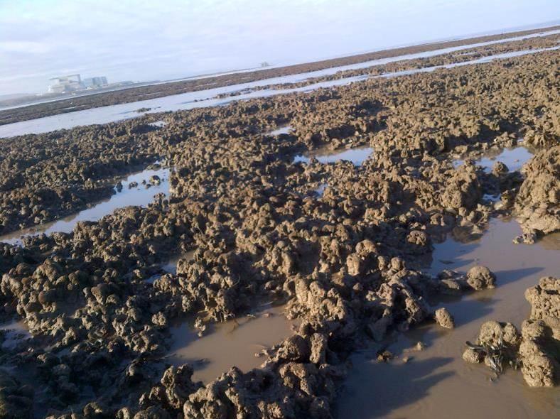 Sabellaria reefs © Devon & Severn IFCA.